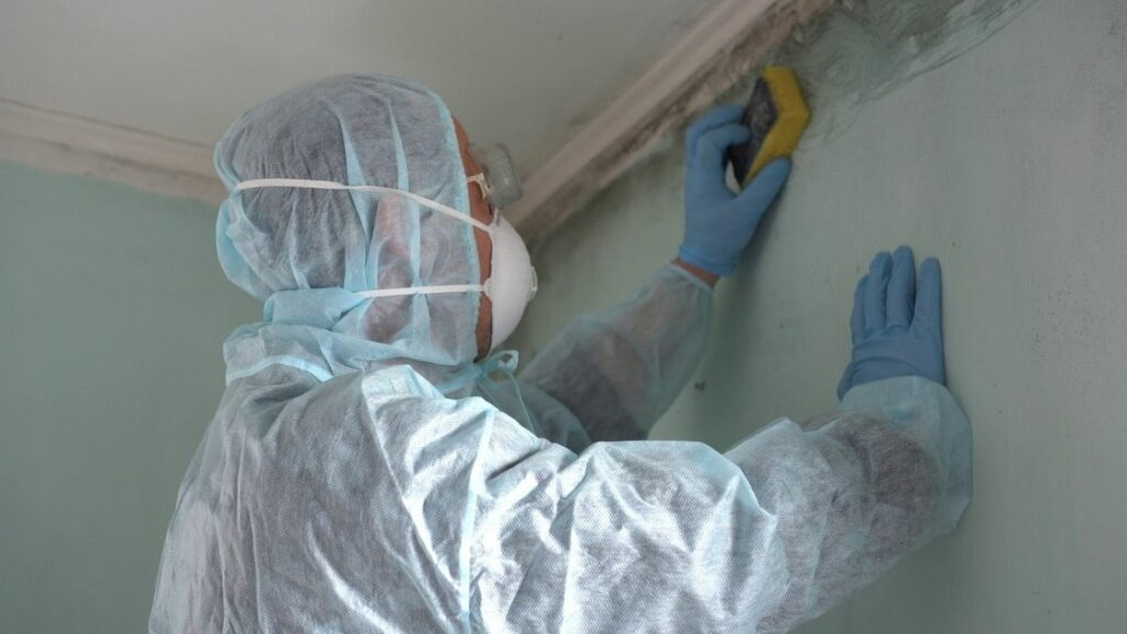 Cleaning Up Attic Mold