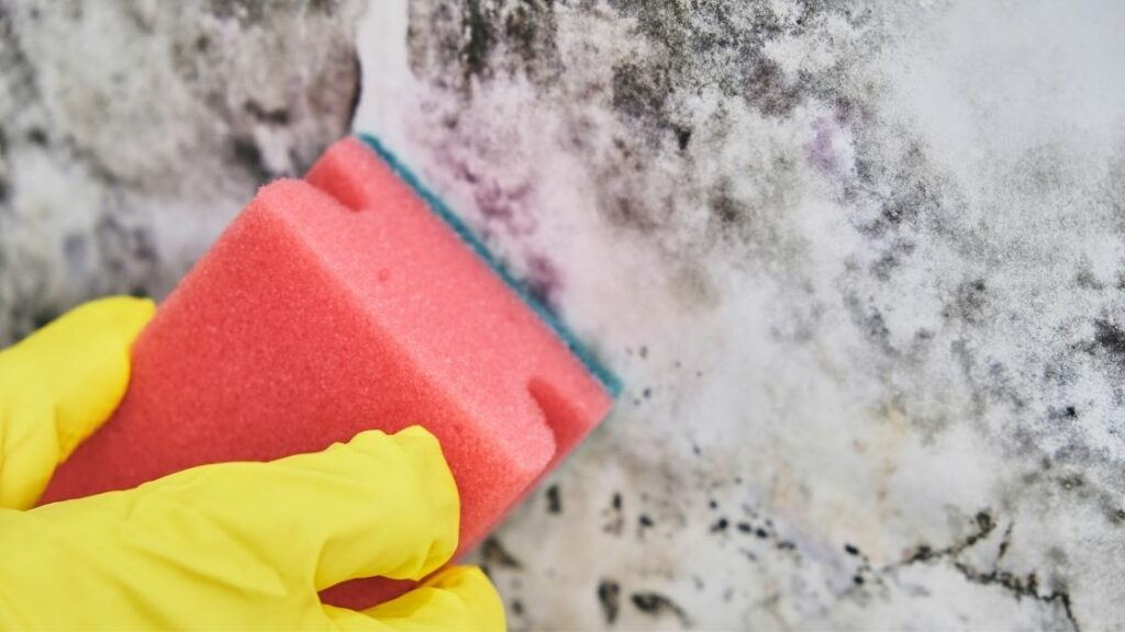 How To Get Rid Of Attic Mold