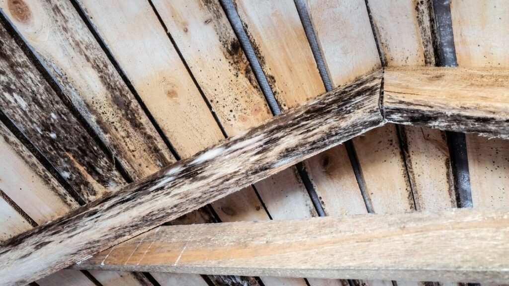Is Attic Mold Dangerous